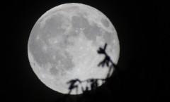 Księżyc i limba