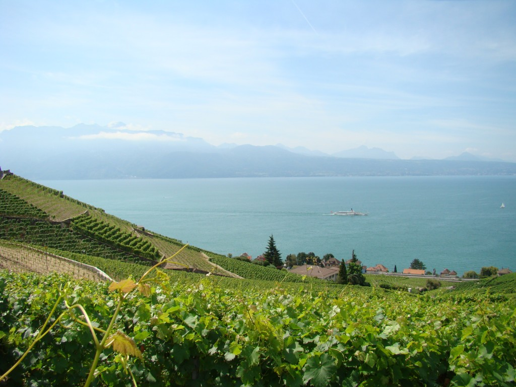 "Lavaux, Lake Geneva and ""rows of rocks"""