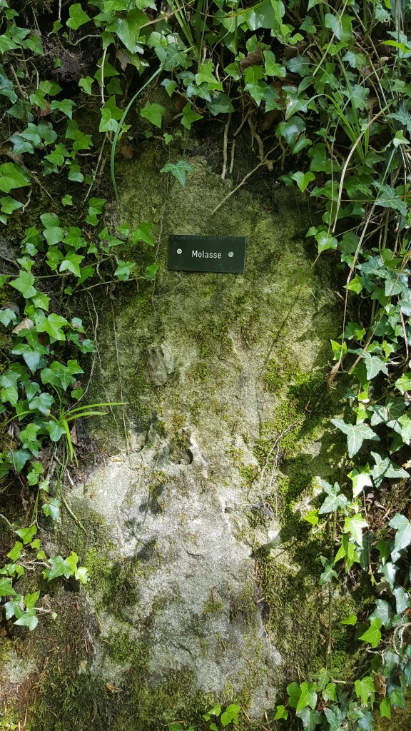 Molasa (łac. mollis 'miękki') – skały osadowe, których sedymentacja zachodziła w sąsiedztwie gór, podczas ich wypiętrzania się lub wkrótce po wypiętrzeniu; ich głównym składnikiem są okruchy skalne pochodzące z niszczenia gór.
